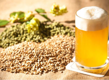 Essential Supplies for Home Brewing Your Own Beer