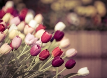 Choosing the Right Flowers for the Right Occasion – 5 Quick Tips