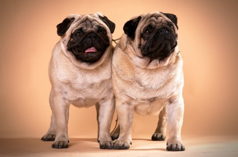 Common Dog Diseases You Should Know